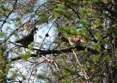 Grouse on tree limb