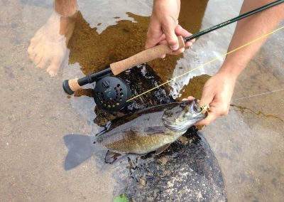 bass on the fly rod