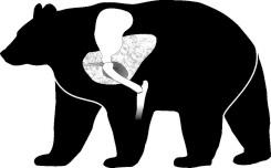 spring black bear hunting in Ontario