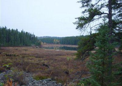 beaver_meadow